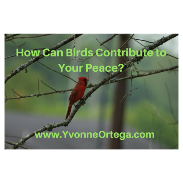 How Can Birds Contribute to Your Peace?